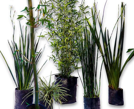 plantas para darle vida a tu jardin On plantas modernas para jardin