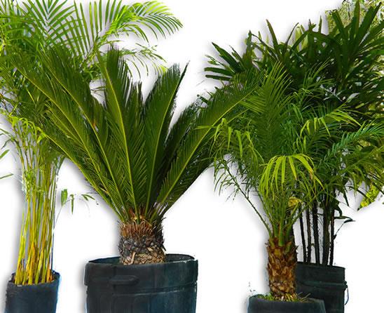 Plantas para darle vida a tu jardin - Plantas de jardin fotos ...